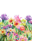 Watercolor blooming cactus background Stock Photo