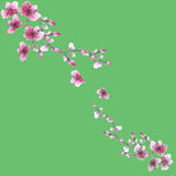 Watercolor blossoming spring branch with pink flowers on the green background Stock Photos