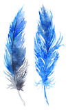 Watercolor blue bird feather pair set  Stock Images
