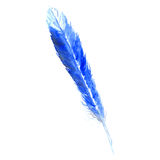 Watercolor blue cyan bird rustic feather isolated Royalty Free Stock Image