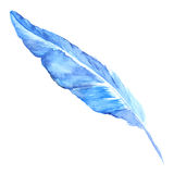 Watercolor blue cyan bird rustic feather isolated Royalty Free Stock Photography