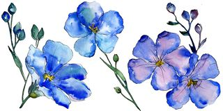 Watercolor blue flax flowers. Floral botanical flower. Isolated illustration element. Aquarelle wildflower for background, texture, wrapper pattern, frame or vector illustration