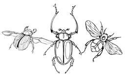 Hand drawn beetles set. Royalty Free Stock Photography