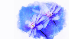 Watercolor blue flowers -Hepatica Royalty Free Stock Images