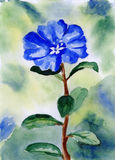 A watercolor blue flower illustration Royalty Free Stock Image