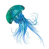 Watercolor Blue jellyfish. Blue jellyfish, watercolor illustration on white background stock illustration