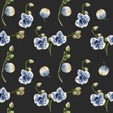 Watercolor blue spotted orchids seamless pattern. Hand painted on a dark background Royalty Free Stock Image