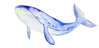 Watercolor blue whale Royalty Free Stock Image