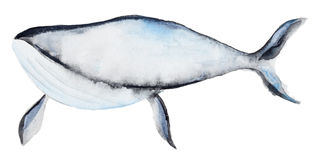 Watercolor blue whale Royalty Free Stock Images