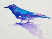 Watercolor of Blue-and-white Flycatcher on paper Royalty Free Stock Photo