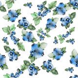 Watercolor blueberries pattern Royalty Free Stock Images