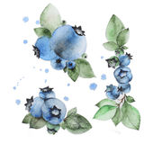 Watercolor blueberry Stock Images