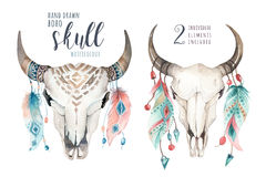 Watercolor bohemian cow skull and feather. Western mammals. Boho hipster deer boho decoration print antlers. Flowers, feathers. Isolated on white background vector illustration