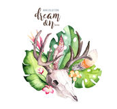 Watercolor bohemian cow skull and tropic palm leaves. Western deer mammals. Tropical deer boho decoration print antlers Royalty Free Stock Photography