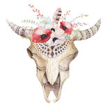 Watercolor bohemian cow skull.  Western mammals. Watercolour hip. Ster boho decoration print antlers. flowers, feathers. Isolated on white background. Boho style Stock Image