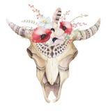 Watercolor bohemian cow skull. Western mammals. Watercolour hip stock illustration