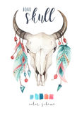 Watercolor bohemian cow skull.  Western mammals. Watercolour hip Royalty Free Stock Photography