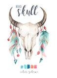 Watercolor bohemian cow skull.  Western mammals. Watercolour hip. Watercolor bohemian cow skul and featherl.  Western mammals. Watercolour hipster deer boho Royalty Free Stock Photography