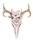 Watercolor bohemian deer skull.  Western mammals. Watercolour  d. Watercolor bohemian deer skull.  Western mammals. Watercolour  boho decoration print antlers Royalty Free Stock Photography