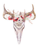 Watercolor bohemian deer skull.  Western mammals. Watercolour  d. Watercolor bohemian deer skull.  Western mammals. Watercolour  boho decoration print antlers Royalty Free Stock Image