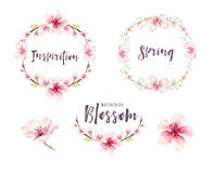 Watercolor boho blossom flower set. Spring or summer decoration. Floral bohemian design. Watercolour isolated. foliage illustration with cherry, green leaf Royalty Free Stock Images