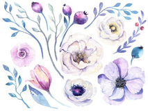 Watercolor boho flower set. Spring or summer decoration floral b Royalty Free Stock Photography
