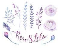 Watercolor boho flower set. Spring or summer decoration floral b Royalty Free Stock Image
