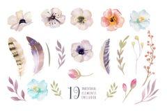 Watercolor boho flower set. Spring or summer decoration floral d Royalty Free Stock Images