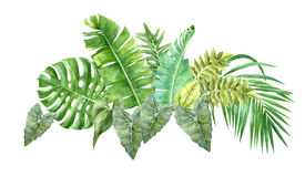 Watercolor border with tropical leaves. Hand drawn watercolor border with tropical leaves Stock Image