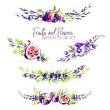 Watercolor borders set with flowers, figs and berries. Original hand drawn illustration in violet shades. Fresh summer stock illustration
