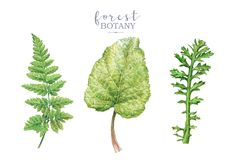 Watercolor botancal image set with forest plants