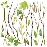 Watercolor botanical collection. Herbs, wild flowers and leaves. Nature set. Spring branches and leaves .Watercolor botanical collection. Herbs, wild flowers and Royalty Free Stock Photography