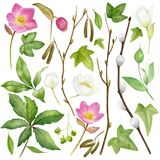 Watercolor botanical collection. Herbs, wild flowers and leaves. Nature set. Spring branches and leaves .Watercolor botanical collection. Herbs, wild flowers and Stock Images