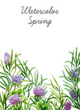 Watercolor botanical elements Royalty Free Stock Photos