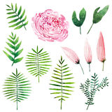 Watercolor botanical elements Royalty Free Stock Image