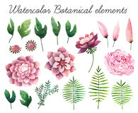 Watercolor botanical elements Stock Photography