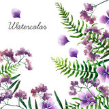 Watercolor botanical elements Royalty Free Stock Photo