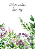 Watercolor botanical elements Royalty Free Stock Images