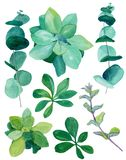 Watercolor botanical green decor set. Baby blue eucalyptus, decorative nettle, succulents, various plants and leaves. All elements are isolated stock illustration