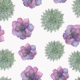 Watercolor botanical illustration, beautiful pattern succulents.Illustration for textile, flower shops, decoration, your design. royalty free illustration