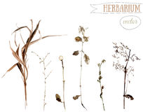 Watercolor botanical illustration of dried wild plants and herbs Stock Photography