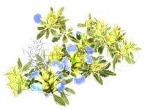 Watercolor botanical illustration vector illustration