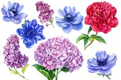 Watercolor botanical illustration. Set of flowers on an isolated background, anemones, hydrangea, peony, lilac.