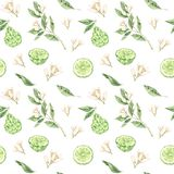 Watercolor botanical illustrations. Seamless pattern with bergamot blossom and fruit. Citrus bergamia flowers, fruit and leaves