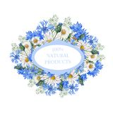 Watercolor botanical label. Hand drawn label of watercolor cornflowers Royalty Free Stock Photo