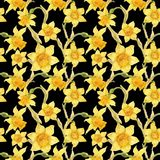 Watercolor botanical realistic floral pattern with narcissus. Bright yellow daffodil on a black background, path included Royalty Free Stock Photo