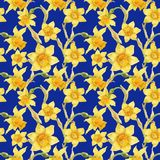 Watercolor botanical realistic floral pattern with narcissus. Bright yellow daffodil on a blue background, path included Stock Images