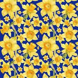 Watercolor botanical realistic floral pattern with narcissus. Bright yellow daffodil on a blue background, path included Royalty Free Stock Photos