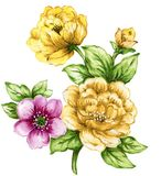 Watercolor botanical Yellow and Pink flowers. Watercolor gouache elegant vintage yellow purple flower hand painted botanical garden flower green leaves spring stock illustration