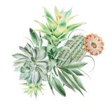 Watercolor bouquet with cactus and succulents. Illustration. stock images